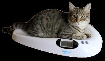 Overgewicht en diabetes